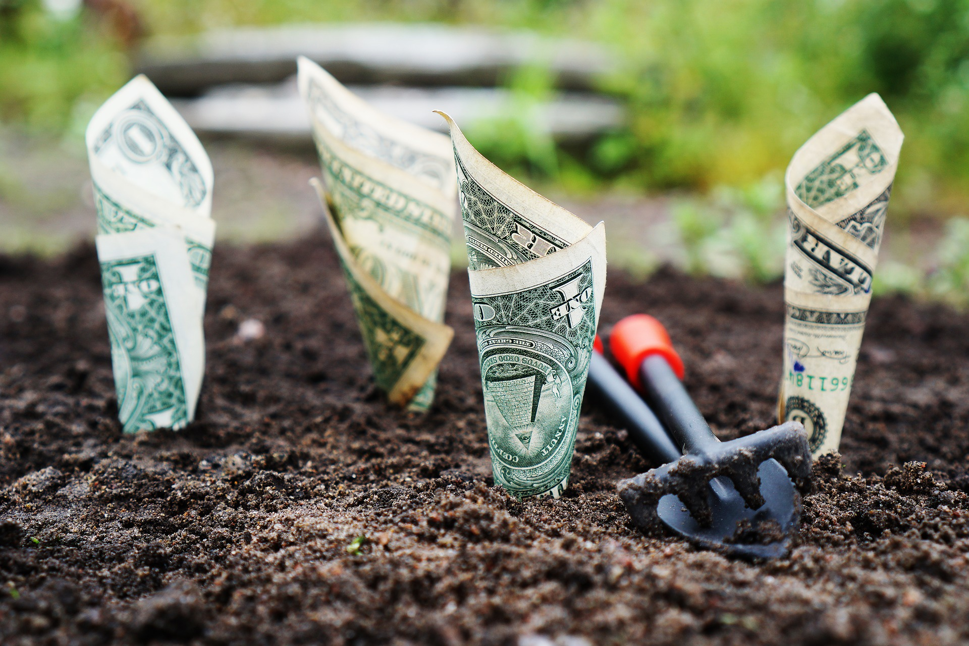 money growing from soil with shovel
